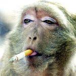 Berhala Dalam Sebatang Rokok